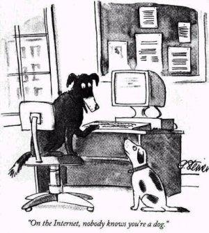dog on the internet